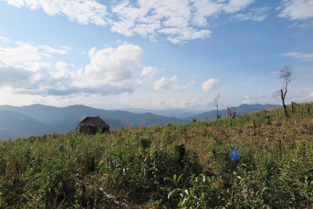 Reisfeld im Norden von Laos