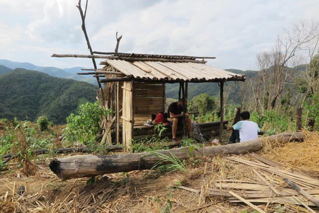 Hütte in einem Reisfeld, Laos