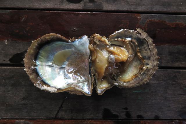 Austernzucht Halong Pearl