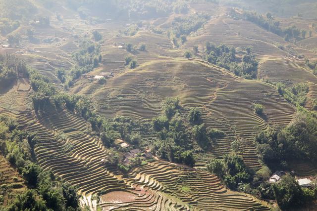 Terrazas de arroz, Sapa