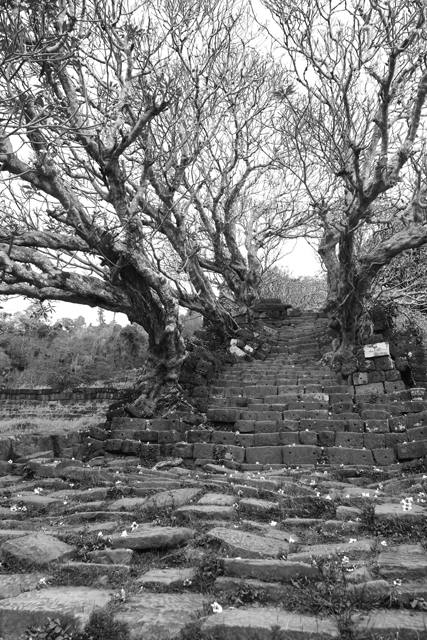 Árboles frangipani en la escalinata de Wat Phu. Champasak, Laos.