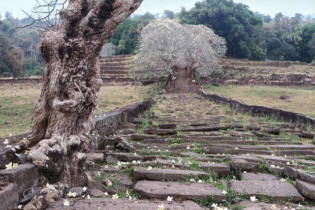 Escalinata de Wat Phu. Champasak, Laos
