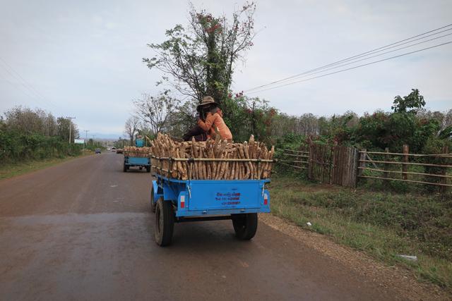 Kleinlaster mit Wurzeln, Laos.